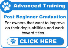 Advanced Dog Training Classes
